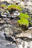 Växter på en klippaframsida Royaltyfri Foto