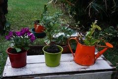 Växter på en palett Arkivfoto