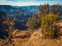 Växter på kanten av Grand Canyon Royaltyfria Foton