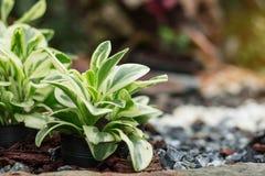 Växter på krukor royaltyfria foton