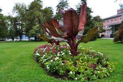 Växter på parkera av Lugano Fotografering för Bildbyråer