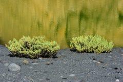 Segla utmed kusten av den gröna lagunen i vulkaniskt landskap, El Golfo, Lanzarote royaltyfri bild