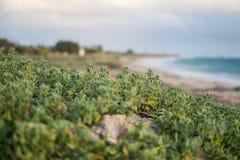 Växter på stranden royaltyfria bilder