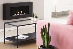 Växter på tabellen mellan rosa färger uttrycker och svärtar spisen i ljus vardagsruminre Verkligt foto royaltyfri bild