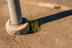 Växter på vägen Arkivfoton