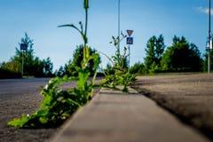 Växter på vägen Royaltyfria Foton