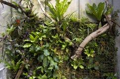 Växter på väggkonstverk royaltyfria bilder