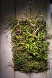 Växter på väggkonstverk royaltyfri foto