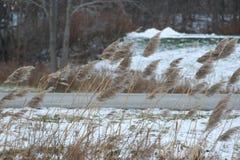 Växter på vägrenen i vinter Arkivfoton
