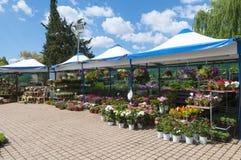 Växter parkerar in Royaltyfri Foto