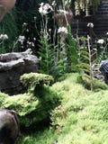 Växter runt om marinaträdgården vid fjärden arkivbild