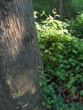 Växter runt om trädet Arkivfoton