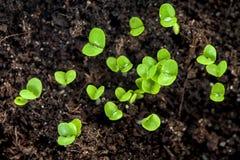 växter smutsar barn Arkivfoto