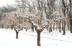 växter snow under Arkivfoto