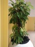 Växter som är bra för skärm som dekorativa växter royaltyfri bild