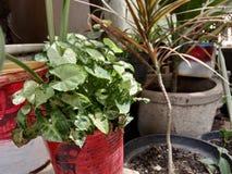 Växter som är små och har en unik form arkivfoton