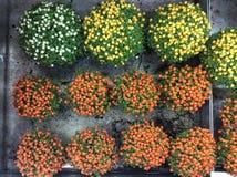 Växter som är till salu i trädgård, shoppar moscow russia royaltyfri bild