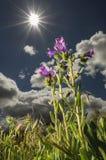 Växter som fångar solen Fotografering för Bildbyråer