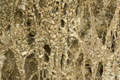 växter som flodstranden rotar sandigt, smutsar vridet royaltyfri fotografi