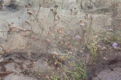 Växter som täckas av spindelrengöringsduk Arkivbilder