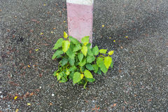 Växter som tillsammans med växer elektricitetspolerna Arkivfoto