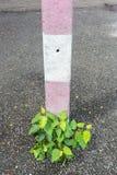 Växter som tillsammans med växer elektricitetspolerna Royaltyfri Fotografi