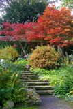 Växter som upp går stenmoment Royaltyfri Fotografi