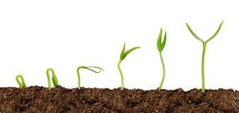 Växter som växer från isolerat jord-växt framsteg royaltyfri bild