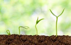Växter som växer från jord arkivfoton
