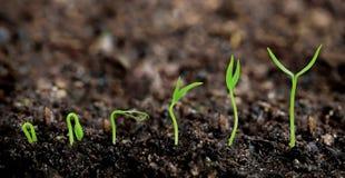 Växter som växer från jord royaltyfri bild