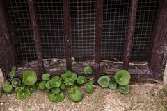 Växter som växer från stenen av ett källarefönster av en byggnad i den gamla staden av Caceres arkivfoto