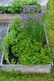 Växter som växer i ett lantligt hem Arkivfoto
