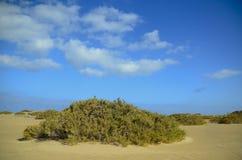 Växter som växer i lagun av sotaventoen Arkivfoto
