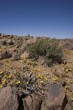 Växter som växer i Richtersvelden, South Africa. royaltyfri bild