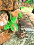 Växter som växer på pagod Royaltyfria Bilder