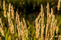 Växter under den ljusa solen Arkivfoto