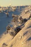 Växter under isen Fotografering för Bildbyråer