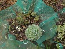 Växter utan blommor Arkivfoton