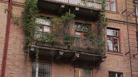 Växter växer från byggnad lager videofilmer