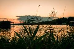 Växter vid sjön på solnedgången royaltyfria bilder