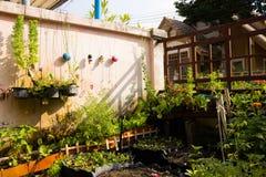 Växterna, grönsaker royaltyfria bilder