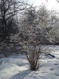Växterna täcktes med rimfrost och snöar Royaltyfria Bilder