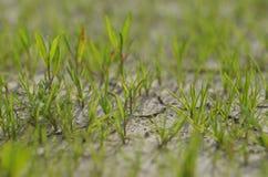 Växterna växer på den torra jordningen Växtförsök att bo det nästa livet fotografering för bildbyråer