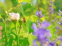 Växtfel Royaltyfria Bilder