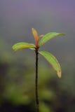 Växtfors Arkivbilder
