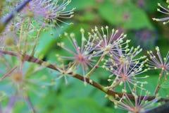 Växtfyrverkerier Royaltyfri Bild