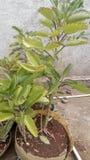 Växtgräsplan Arkivfoto