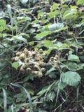 Växtgräsplan Arkivfoton