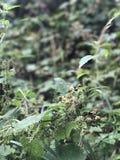 Växtgräsplan Royaltyfria Bilder
