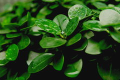 Växtgräsplansidor royaltyfri bild